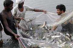 Regular la sobrepesca (Foto WB)