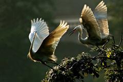 La mitad de las aves han desaparecido (F. WB)