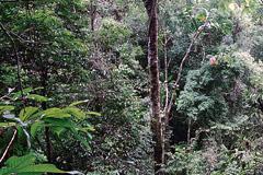 Los bosques, bajo la mira de la FAO (F.UN)