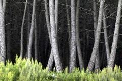 Los bosques bajo presión (Foto FAO)