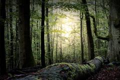 Bosques un para el desarrollo sostenible (UN)
