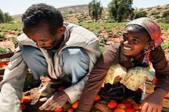 Trabajadores agrícolas (WB)