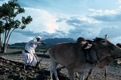 La agricultura afectada por el clima (WB)
