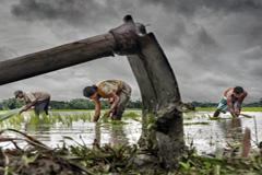 Campesinos cultivando arroz (WB/ S.Sarkar)