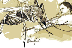 Larga batalla contra mosquito Zika (UN)