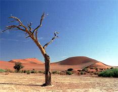 Incremento de 4°C de la temperatura del planeta provocará olas de calor extremo