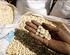 La FAO promueve alimentos tradicionales y proclama victoria sobre la rabia