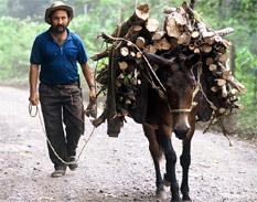 Objetivos del Milenio: la prioridad es el trabajo y los medios de vida