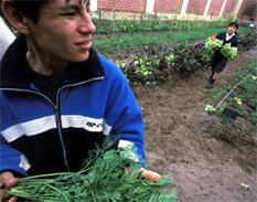 Alimentos - Foto UN/ archivo