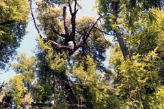 Bosque nativo chileno - Foto LDD