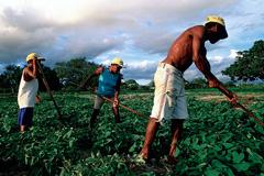 Campesinos en Brasil - Foto WB/ S.Wallace