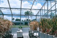 Greenhouse (Foto WB)