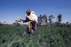 Pequeño agricultor (Foto FAO)