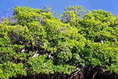 Protección global para los bosques (Foto SL)