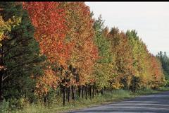 Un bosque europeo en otoño (Foto WB)