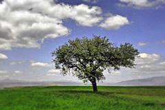 La economia verde no frena el desarrollo (WB)