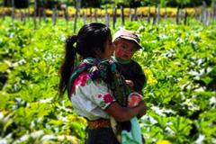 Joven madre trabajadora agrícola (F.WB)