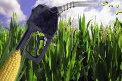 Biocombustibles a paso lento (Foto WB)