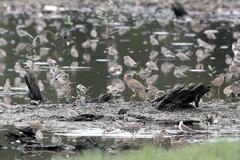 Aves víctimas de los desechos (foto WB)