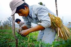Potenciar a los pequeños agricultores (WB)