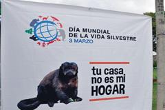 Logo de la campaña en Perú (Cites)