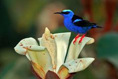 La maravillosa biodiversidad (P.Earth)