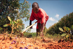 Apoyo a la agricultura sostenible (Fao)