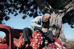 Un cultivador de cebollas (FAO)