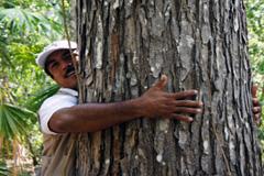 Esencial la protección de los bosques (WB)