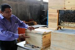 Apicultor mexicano en pleno trabajo (WB)