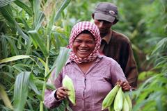 Código para garantizar agricultura sana (WB)
