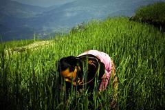 Valorizar la importancia de los agricultores (UN)