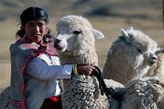 Apoyo de la ONU a criadores de alpacas (IFA)