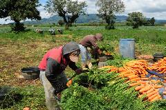 Combatir a los enemigos del agro (UN)