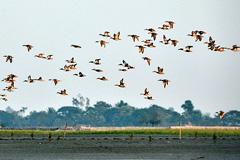 Aves bajo protección internacional (UN)