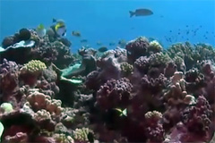 Proteger la salud de los océanos (UN)