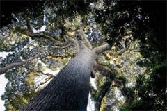 Los bosques en peligro (UN)