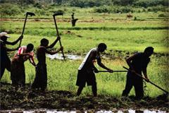 Cultura de arroz en Asia (WB)
