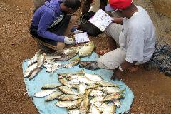Controlando el origen de la pesca (WB)