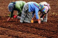 Suelos para el desarrollo sostenible (UN)