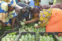 FAO: El coste de la importación de alimentos crecerá este año a 1.413 billones de dólares