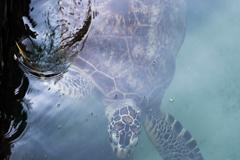 Objetivos de Desarrollo Sostenible: Ecuador combate la marea de plástico