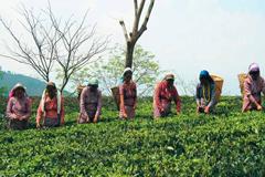 Estimación de la OIT: 24 millones de empleos serán creados en la economía verde