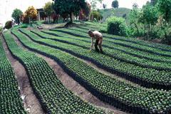 FAO: Buscando los 10 mejores proyectos de desarrollo en América Latina