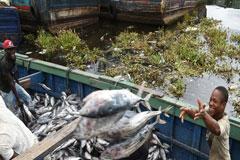 FAO: El mundo se une para acabar con la pesca ilegal, América Latina, en el camino correcto