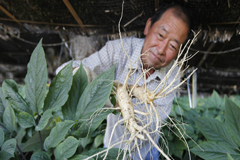 FAO: Dos nuevos sitios se suman a la lista del patrimonio agrícola mundial