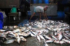 FAO: Los latinoamericanos comerán cada vez más pescado