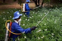 """Expertos de la ONU: La sentencia de Monsanto, una """"victoria para los derechos humanos"""""""