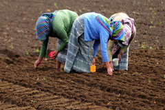 Haití, Guatemala y Colombia, clave para reducir el hambre en América Latina