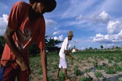 América Latina se está olvidando de sus campesinos alerta un nuevo informe de la FAO